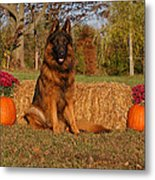 Hoss In Autumn II Metal Print