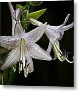 Hosta Front And Center Metal Print by Michael Putnam