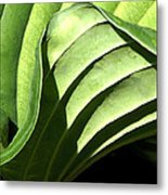 Hosta Leaf Metal Print