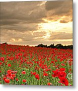 Hot Air Balloon Over Poppy Field Metal Print