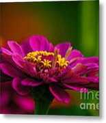 Hot Pink Is In For Summer Metal Print