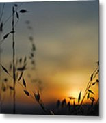 Hot Sunset Metal Print