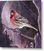 House Finch Looking At Me Metal Print