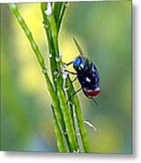 House Fly On Mustard Stem Metal Print