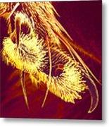 Hover Fly Foot, Sem Metal Print by Susumu Nishinaga