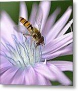 Hoverfly On Flower Metal Print