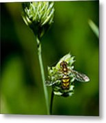 Hoverfly On Grass Metal Print