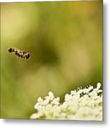 Hovering Over Metal Print