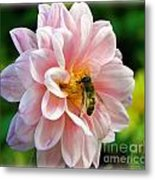 How Sweet In Pink Metal Print