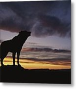 Howling Wolf Silhouetted Against Sunset Metal Print