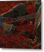 Huckleberry Bushes And Multi-hued Metal Print