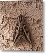 Huge Moth On Stucco In Las Vegas Metal Print
