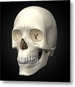 Human Skull, Artwork Metal Print