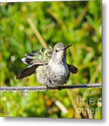 Hummer Takes A Shower Metal Print