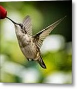 Hummers In The Garden Two Metal Print by Michael Putnam