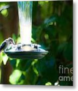 Humming Bar Metal Print