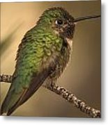 Humming Bird On Branch Metal Print