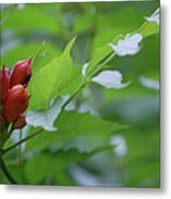 Humming Buds By Jammer Metal Print