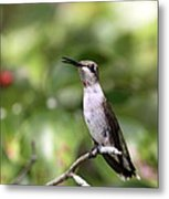 Hummingbird - Berries Metal Print