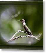 Hummingbird - Bird Metal Print