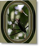 Hummingbird - Card - Glint Of The Eye Metal Print