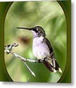 Hummingbird - Gold And Green Metal Print