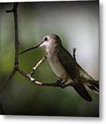 Hummingbird - Under The Canopy Metal Print