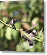 Hummingbird - You Have Done It Now Metal Print