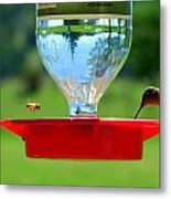 Hummingbird And A Bee Metal Print