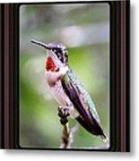 Hummingbird Card Metal Print