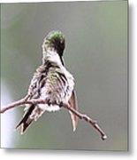 Hummingbird - Cleaning Up Metal Print