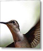 Hummingbird - Closeup Metal Print