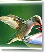 Hummingbird Eating Metal Print