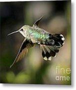 Hummingbird Fly By Metal Print