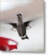 Hummingbird Flying Metal Print