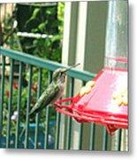 Hummingbird II Metal Print