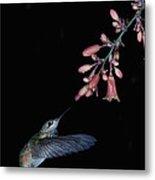 Hummingbird No 7 Metal Print