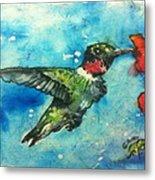 Hummingbird Sips Metal Print