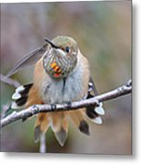 Hummingbird Stretch Two Metal Print