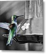 Hummingbird Wings II Metal Print