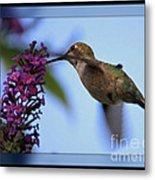Hummingbird With Blue Border - Digital Painting Metal Print
