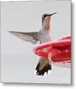 Hummingbird With Wings Back Metal Print