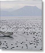 Humpback Whale Diving Amid Seabirds Metal Print