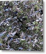 Hundreds - Tree Swallows Metal Print