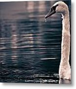 Hungry Swan Metal Print