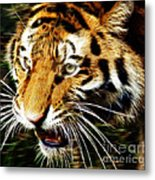Hungry Tiger Metal Print