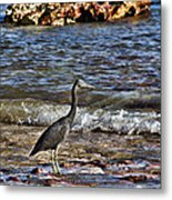 Hunting In The Shallows Metal Print