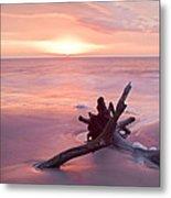 Hunting Island South Carolina Metal Print
