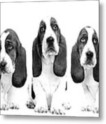 Hush Puppies Metal Print