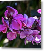 Hyacinth Bean Metal Print